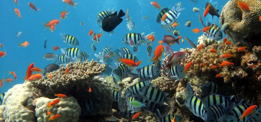 Fish Tank - DPC